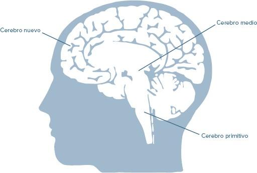 Los 3 cerebros en la toma de decisiones