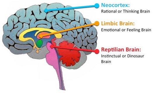 Alexia de la Morena | El cerebro primitivo es 250 veces más rápido ...